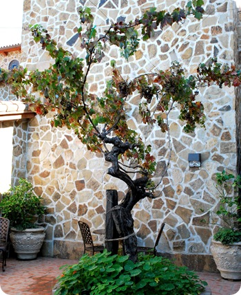 courtyard tree