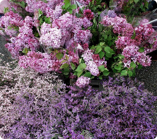 cg lilacs and heather