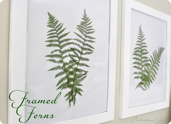 framed ferns