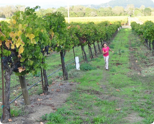 child running in vineyard