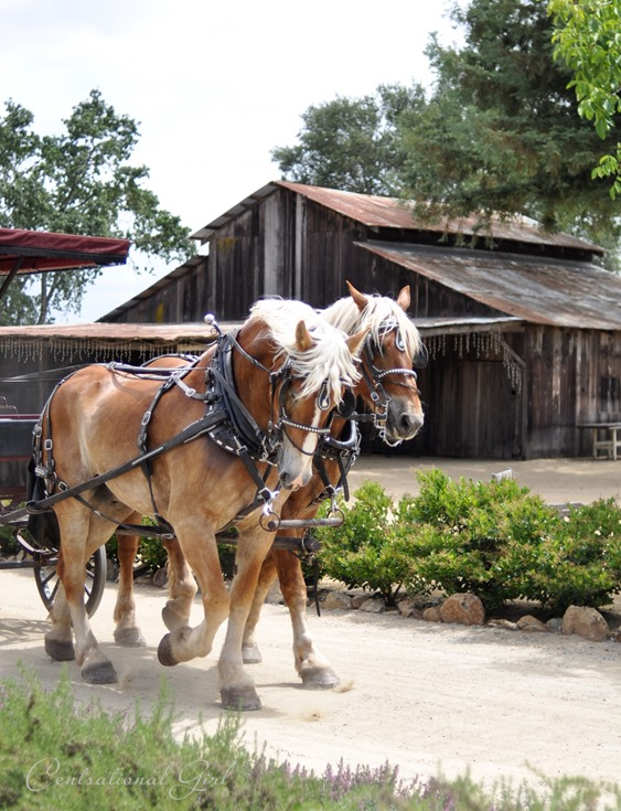 clydesdales and barn
