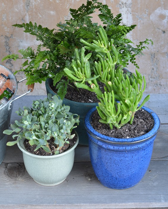 trio of container plants