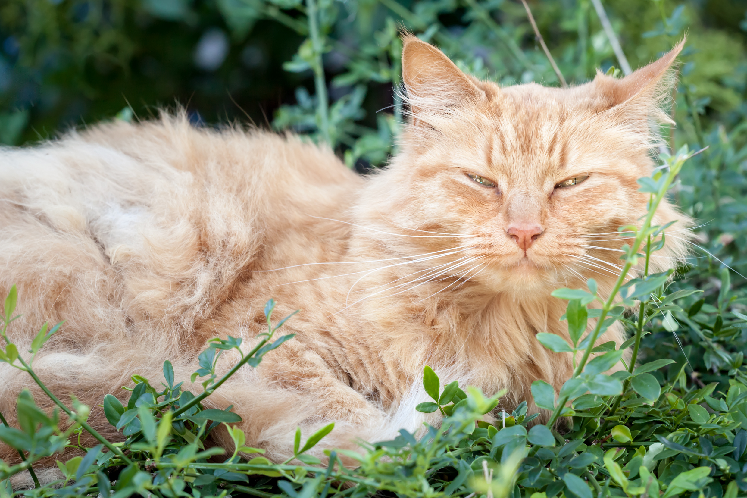 Cool An Cat Dying Cat Has Bad Breath Treatment Cat Has Bad Breath After Tooth Extraction Signs houzz-03 Cat Has Bad Breath