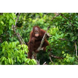 Top Here At We Love Why Today Jungle Friends Primate Sanctuary Facebook Jungle Friends Primate Sanctuary Location bark post Jungle Friends Primate Sanctuary