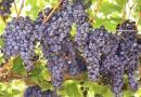 10 फल जिनको खाने से बीमारियाँ दूर भागेंगी