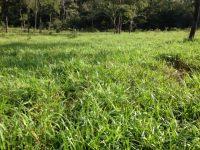Fazenda em Bonito MS com 164 hectares