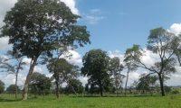 Fazenda com 500 hectares em Campina Verde-MG