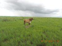 Fazenda em Corumbá MS com 2.670 Hectares