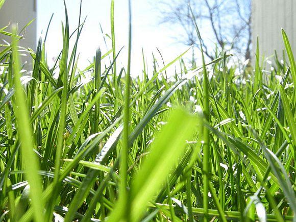 Grass_Aeration.jpg