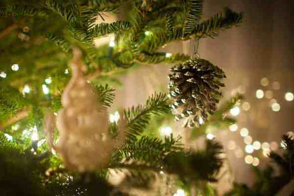 Tips For Maintaining Your Live Christmas Tree