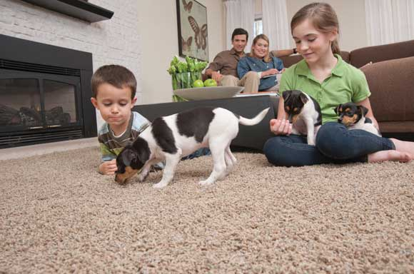 Mohawk Flooring That's Good for the Earth and Your Pets