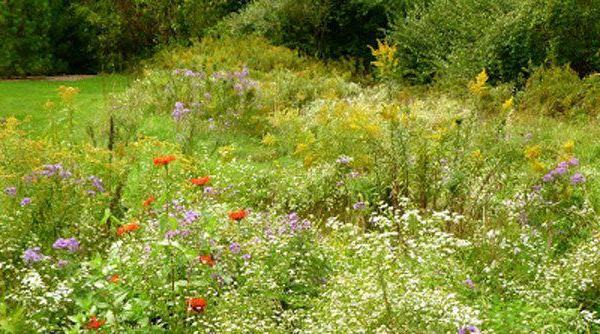 Five Steps to Your Own Backyard Meadow
