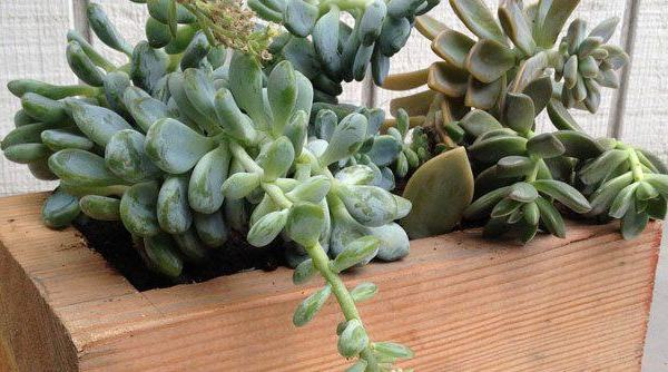 Make Succulent Planters from Wood Blocks