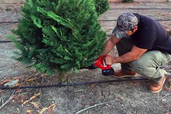 How To Cut Your Own Christmas Tree