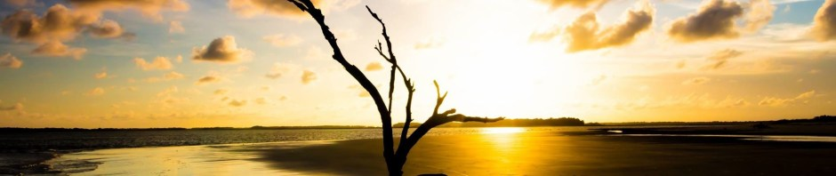 donnie-whitaker-driftwood-tree