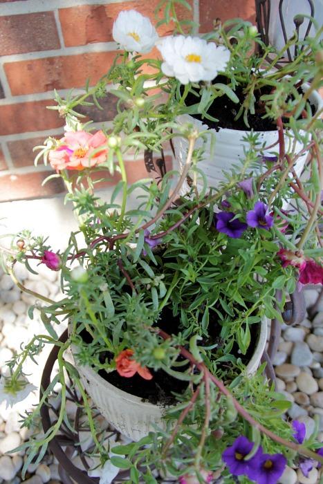 close up flowers