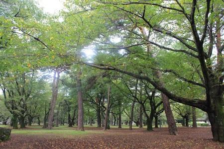 oomiya-park7