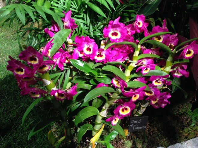An Orchid Eruption - Honoring Volcanoes National Park