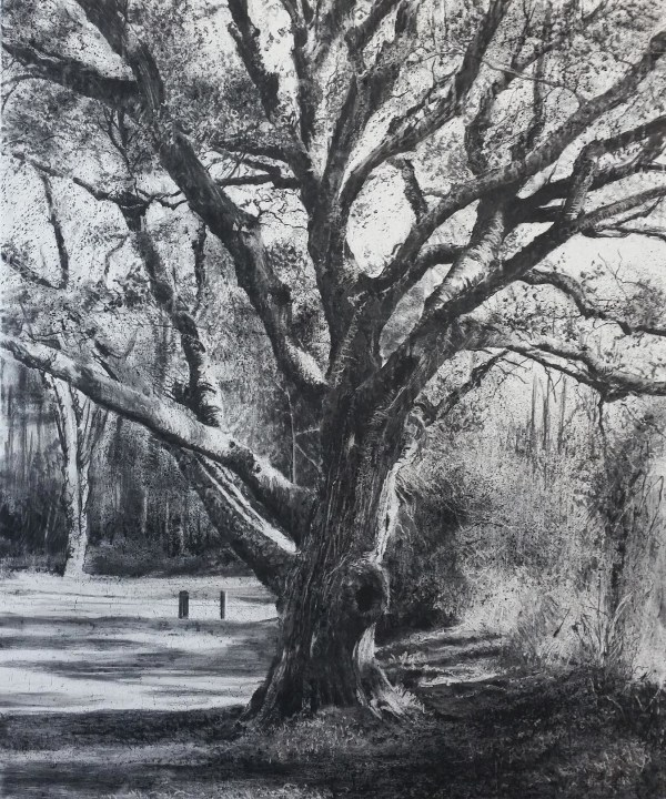 'memory tree' by Michael Wann at the chimera gallery, Mullingar, Co Westmeath, Ireland