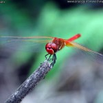 china-macro-insects-006
