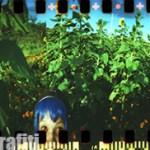 spinner_360_sunflowers_007