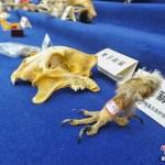 poacher-yunnan-003
