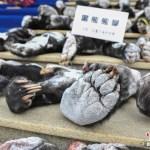 poacher-yunnan-004