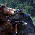 horses-002