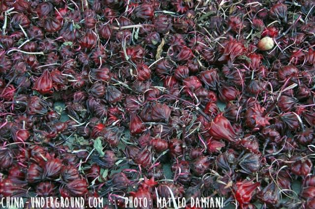 tulou-seeds