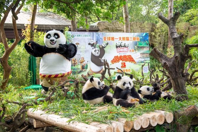 Po visits his kin at Chimelong Safari Park in Guangzhou, China. (Credit: Chimelong)