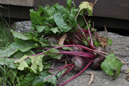 crosbys egyptian beet
