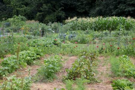 Community Garden 13