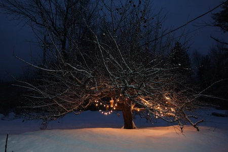 lights-on-apple-tree-1