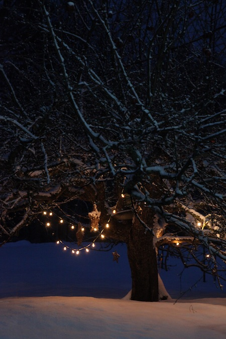 lights-on-apple-tree-2