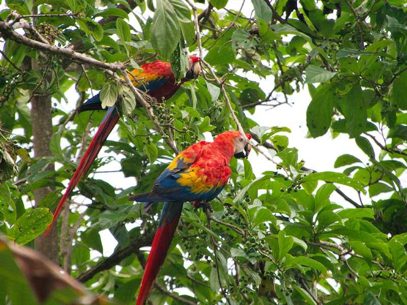 rainforest trek