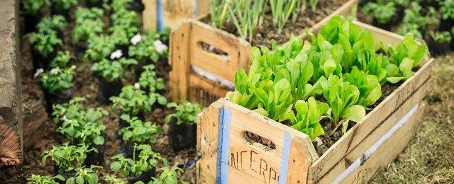 Sesc Vila Mariana tem oficina gratuita sobre a prática de agricultura urbana