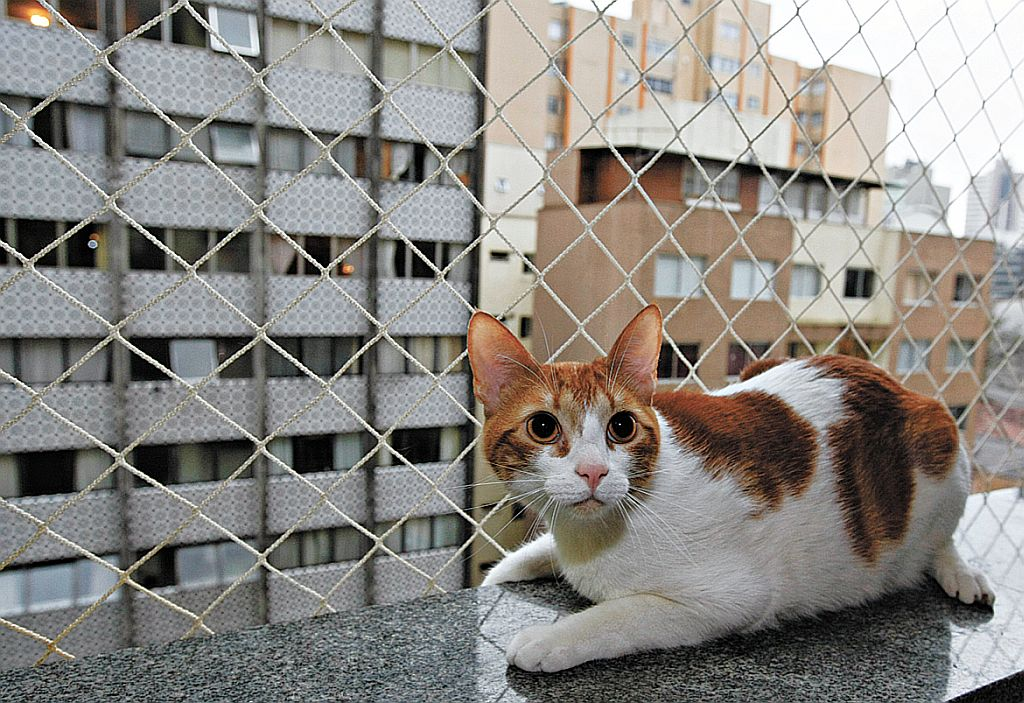 Síndrome do gato voador: já ouviu falar?