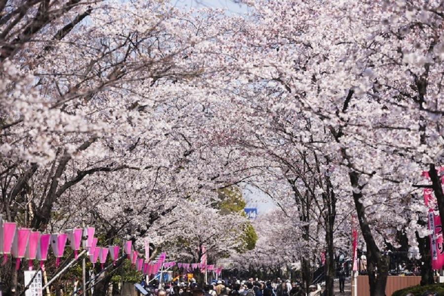 Quer um motivo perfeito para visitar o Japão?