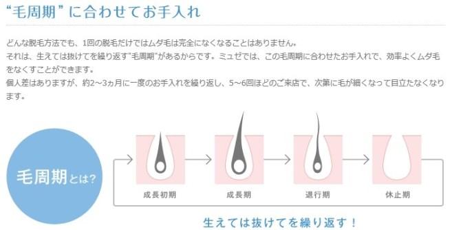 毛周期説明