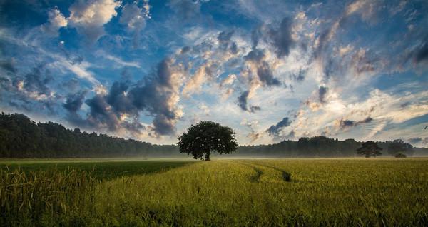 Photos de la création de Dieu et textes qui vous donneront envie de Le louer...    Tree-247122_960_720