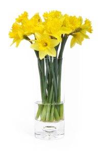 Daffodils. Public domain image.