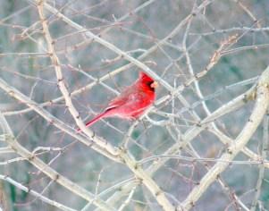 2A. Cardinal