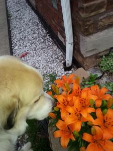 DogFlowers