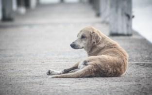 Cães abandonados agora podem ser mapeados e encontrados