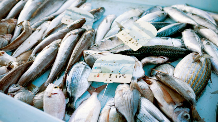 Marseille-Fish-Market-7