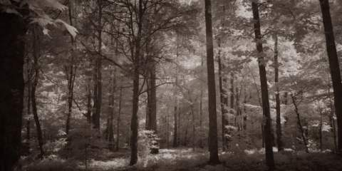 Spend 2 minutes with a VariCam LT Infrared Test