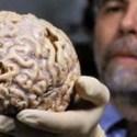 El cerebro nos engaña