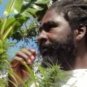 Plantación de marihuana de Bob Marley