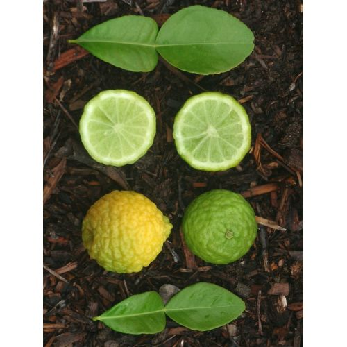 Medium Crop Of Difference Between Lime And Lemon