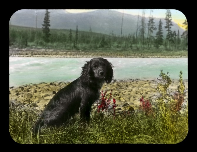 Mr Muggins, 1908. Whyte Museum of the Canadian Rockies, V439-ps-38.